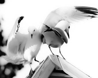 Photography, Seagull hug