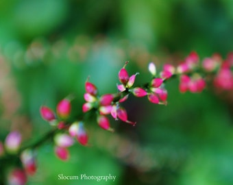 Flowers, Pink Flowers, Photography