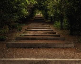 Robin's Path