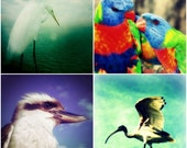 Australian Wildlife Photography Set, Bird Photos, Heron, Kookaburra, Rainbow Lorikeets, Nature Prints, Animal Photography