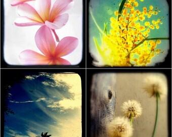 Nature Photography Set of Four 5x5 - Flower Photographs, Botanical Art, Wildflower Photos, Floral Home Decor, Pink Frangipani Art