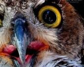 owl decor, owl print, bird print, owl photo, owl eye photo, owl beak photo, owl print, owl, owl photo, owl art, bird photo, bird art,
