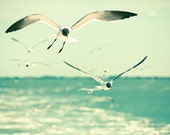 Seagull photo North Carolina coast laughing gulls fresh mint green outer banks teal turquoise seaside ocean photography nature wall art