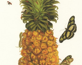 Pineapple with Butterfly Caterpillars and Red Winged Insect  Maria Sibylla Merian Reproduction Botanical Entomology Print