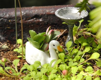 Bird Lovers Only Miniature Garden Set, Swan pot, Feeder, Birdbath for Fairy Garden, Terrarium, Sedum Cuttings Included