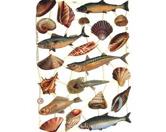 Made In Germany Die Cut Paper Scraps With Seashells And Fish Animals  7247