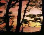 Ocean Photograph Cypress Trees at Sunset California Coastal Photograph