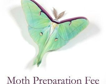 Moth Preparation Fee