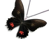 Real Butterfly Wing Necklace / Pendant (WHOLE Papilio Isidorus Butterfly - W123)
