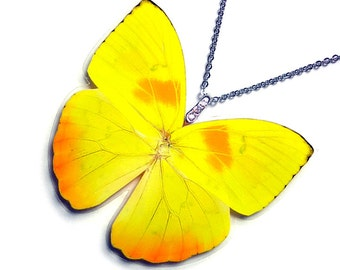 Real Butterfly Wing Necklace / Pendant (WHOLE Yellow Phoebis Philea Butterfly - W049)