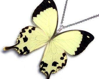Real Butterfly Wing Necklace (WHOLE Papilio Dardanus Butterfly - W065)