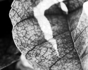 Leaf Map fine art photography print (free shipping)