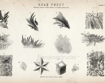 1886 Antique Print of Hoar Frost