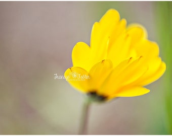 Spring Yellow Blossom Flower Fine Art Canvas wrap- macro
