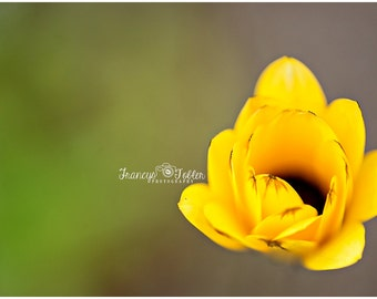 Spring Yellow Blossom Flower Fine Art Canvas wrap- macro 4