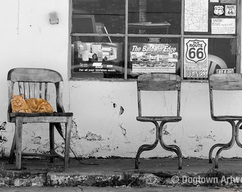 Route 66 Tabby, large original photograph of a tabby cat on a chair in front of an old U.S. 66 garage in New Mexico
