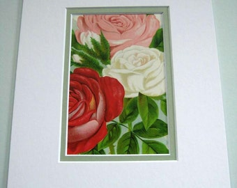 Rose Print Antique Botanical Print Lithograph Pink Red White Heirloom Roses Matted 1920's Nursery Catalog