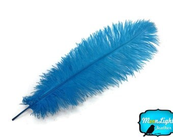 """Ostrich Feathers, 10 Pieces - 17-19"""" Turquoise Ostrich Dyed Drabs Body Feathers : 3311"""