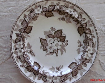 Vintage Brown Transfer Plate Wedgwood Staffordshire Transferware Dogwood Flowers