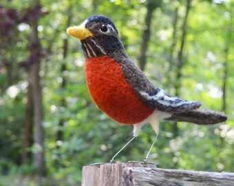 Mr. American Robin, needle felted bird art sculpture
