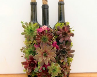 Succulent Wine Bottle Garden, A great succulent gift