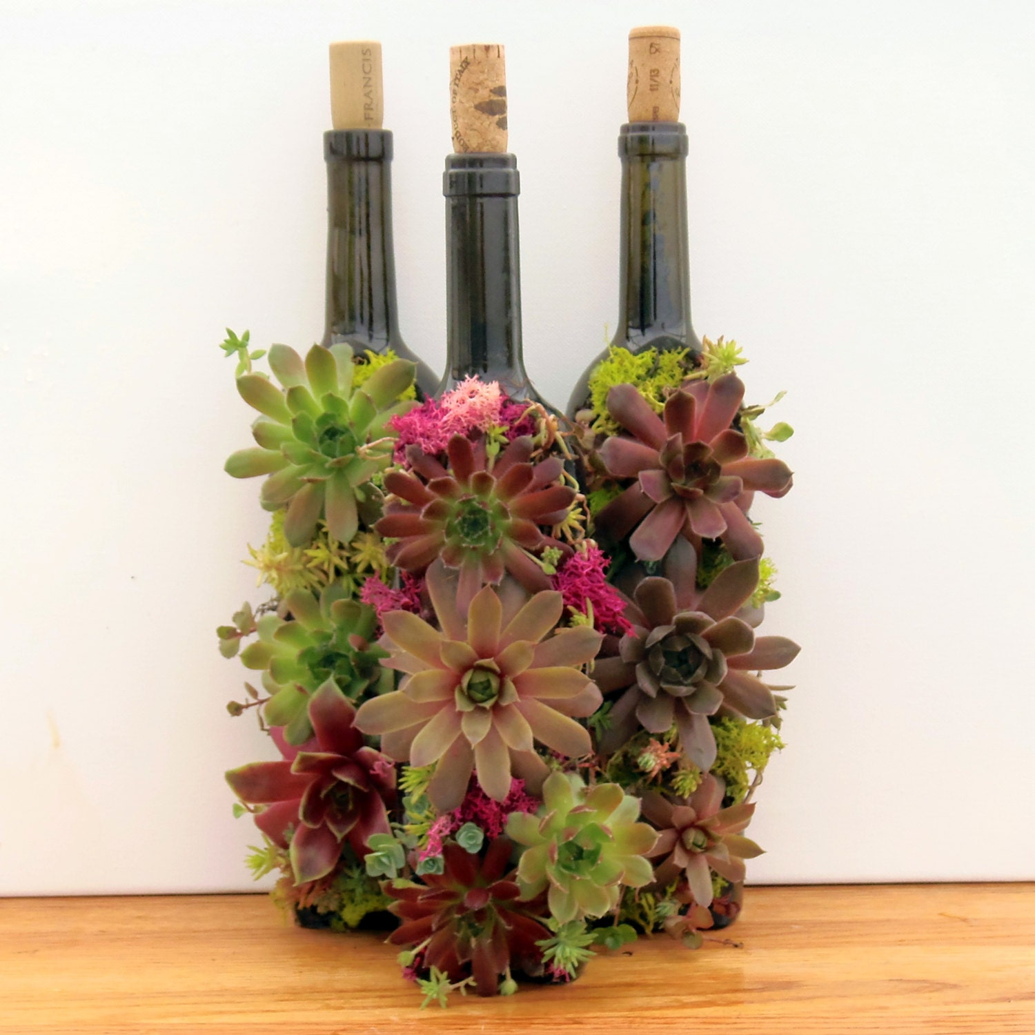 succulent wine bottle garden a great succulent gift by