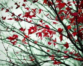 Maple Leaves Photograph, Gray Blue Red Nature Photography, Rustic Fall Wall Decor, Autumn Branches with Scarlet Leaves