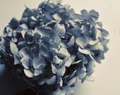 Blue Flower Photography, Hydrangea Print, Dried Flowers, Home Decor, Indigo Blue, 8x10 Print, A Blue Day ..