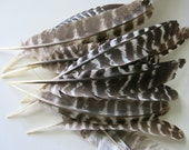 Turkey Feathers Dozen Natural Shed No Kill Tennessee