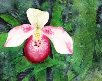 Minnesota, Pink Lady Slipper, Watercolor Original, State Flower, Yellow