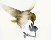 Bird Art Card Blank Greeting Card Hummingbird and Flower