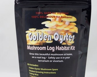 Golden Oyster Mushroom Log Habitat Kit For Terrariums Vivarium Reptile Tanks