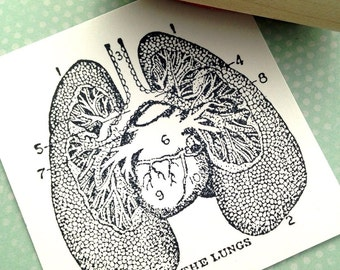 The Lungs Diagram  Wood Mounted Rubber Stamp 6133