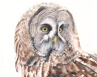 Great Grey Owl Print of watercolor painting GO3715- A4 size medium print wall art print - bird art print