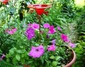 CONTAINER GARDENING, Butterfly Feeder, stained glass, RED, copper, garden stake, Garden Art