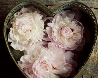 peony art print, heart art, love, romantic flower art, rustic home decor, farmhouse decor, pink flower art,fine art print,floral nursery art