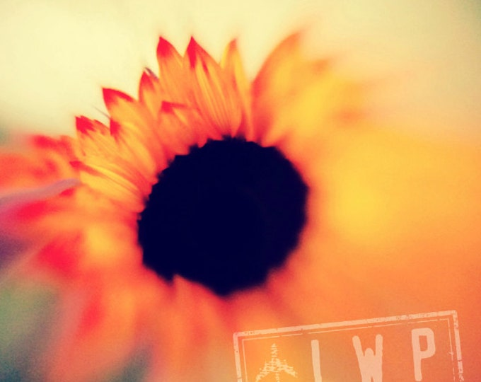 Sunflower Photography Print on Wood - 3 sizes available