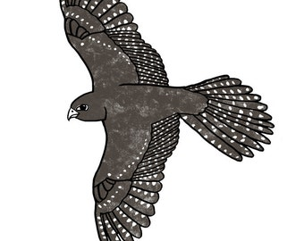 NZ Falcon Limited Edition A4 Archival Art Print