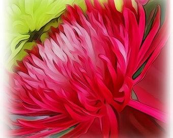 Spider Mum Flower Note Cards