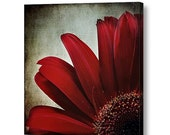 Dark Red Crimson Flower Floral Petals Mum Daisy, Romantic Lush Dramatic Square Fine Art Photography Print on Gallery Canvas Wrap Giclee