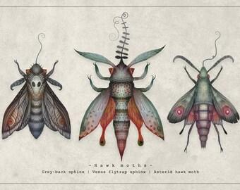 Hawk moths - A4 Art print