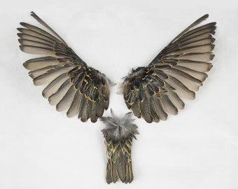 """7"""" Starling wings and tail Taxidermy bird avian pair feathers feather sets open wings WING01"""