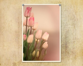Nature Photography | Flowers | Floral Photo |Tulips | Pink Tulips | Shabby Chic | Soft Colors | Oregon | Pink Floral Print