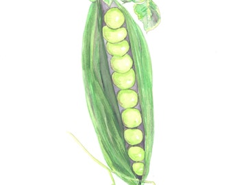 Peas in Pod Watercolor Print, Vegetable Painting, Kitchen Home Decor Wall Art, Garden Food
