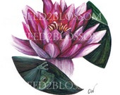 Water Lily- printable art_015