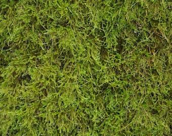 Shag Moss, untreated, natural, living moss