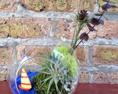 Sailboat and Air Plant Moss Terrarium - A Unique Fathers Day Gift or Birthday Gift