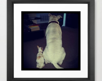 BFF, Guera (Chihuahua) and Raiden (Pit Bull Mix) Digital Animal Photography, Home decorations, Wall Art