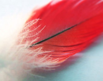 """Feather Photo, Feather Print, Nature Photography, Red Feather, Feather Art, Romantic Photo, Fine Art Photography """"Feathery"""""""