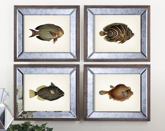 Patterned Fish Print Set - 1801 Fish Drawings. - Fine art print of a vintage natural history antique illustration